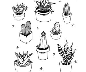 drawing and plants image
