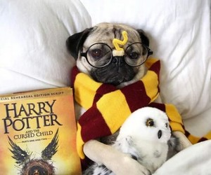 dog, harrypotter, and hp image
