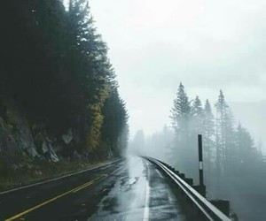 tree, nature, and road image