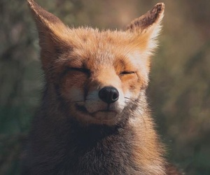 fox, background, and wellpaper image