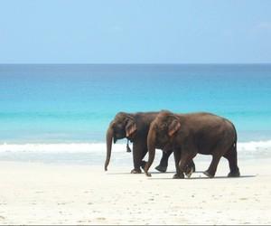 beach, elefants, and landscape image