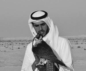 animals, arabic, and qatar image