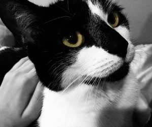 cat, photography, and blackandwhit image