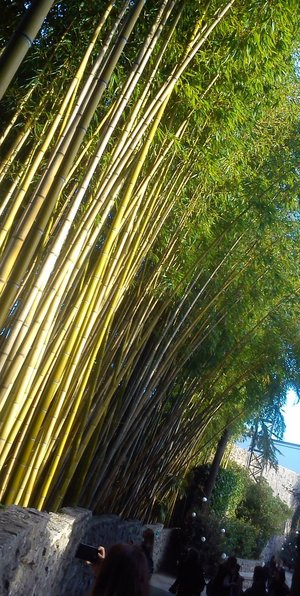 alternative, bamboo, and blue image