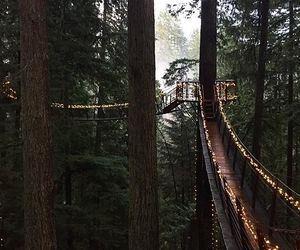 forest, romantic, and vancouver image