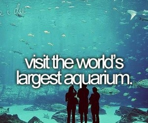aquarium, before i die, and Dream image