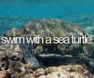 before i die, sea turtle, and Dream image