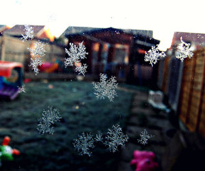 cold, garden, and ice image