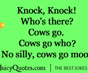 cow, meme, and cows image