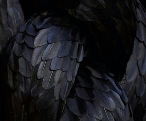 black, feather, and wings image