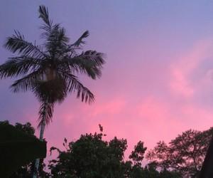 brazil, pink, and purple image