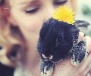 adorable, autumn, and bunny image