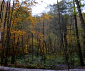 nature, trees, and woods image