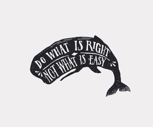 quotes, life, and whale image