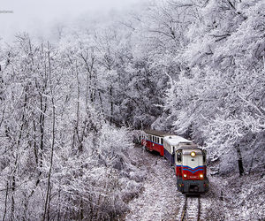 forest, snow, and train image
