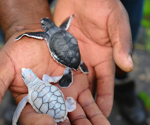 beach, paradise, and turtles image