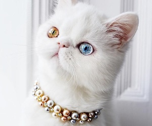 accessories, animal, and art image