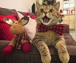 cat, christmas, and kitty image