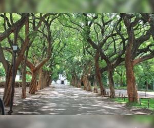 church, trees, and pe image