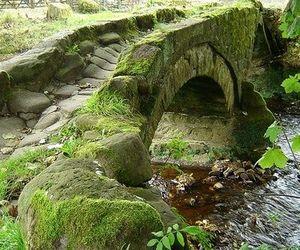 bridge and green image