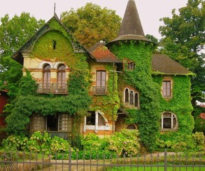 home, moss, and nature image