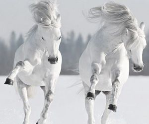 white, horse, and snow image