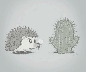 love and cactus image