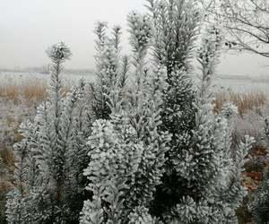 frost, natur, and see image