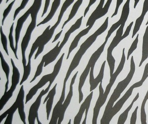 black and white, wallpaper, and zebra print image