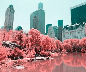 Central Park, fashion, and lake image