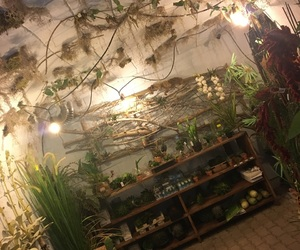 green, myworld, and plants image