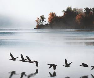 photography, nature, and birds image
