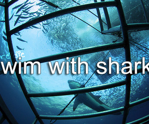 before i die, shark, and bucket list image