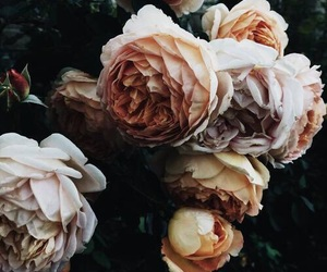 flowers, rose, and dark image