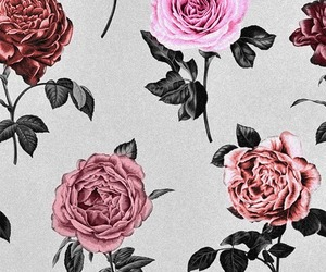 flowers, rose, and background image