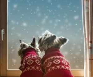 puppies, snow, and cute image