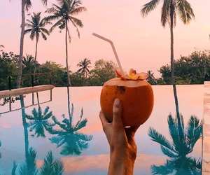 summer, drink, and coconut image