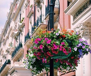 flowers, indie, and city image