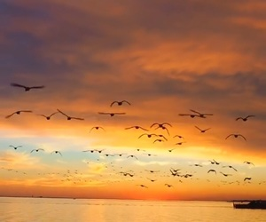 bird, chillout, and life image