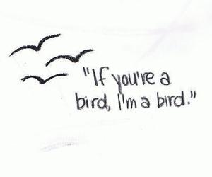bird, love, and quote image
