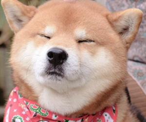 dog, animal, and doge image