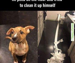 animal, dog, and funny image