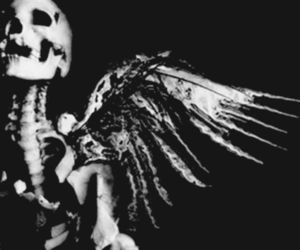 black and white, wings, and skeleton image