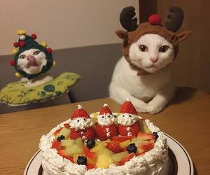 cake, cats, and costumes image