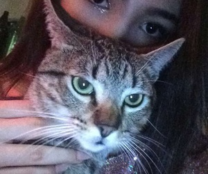 cat, eyebrow, and glitter image