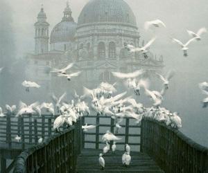 bird, venice, and fog image