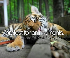animal, protest, and bucket list image