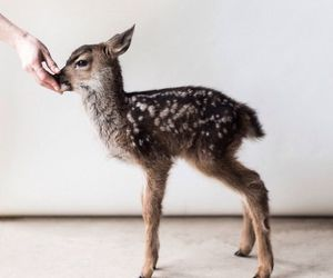 animals, baby, and cutie image