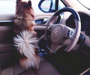 dog, car, and luxury image