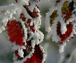 snow, leaves, and winter image